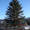 Дорогие жители Карачаевского городского округа!  Сердечно поздравляю вас с наступающим Новым годом!