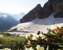 В Тебердинском биосферном заповеднике проводится работа по развитию познавательного туризма