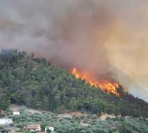 Спасем лес от огня!