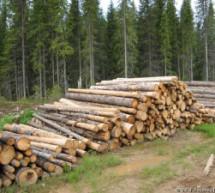 Новое в законодательстве о лесопользовании