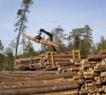 Усиление уголовной и административной ответственности за правонарушения в сфере лесного хозяйства