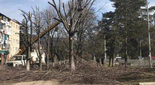 МБУ «Карачаевский Зеленстрой» начал омолаживающую обрезку деревьев в Карачаевске