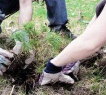 Более 70 саженцев сосны высадили у мемориала жертвам депортации в КЧР ко Дню возрождения карачаевского народа