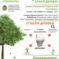 «Сдай макулатуру – спаси дерево!».